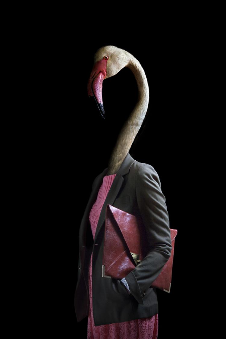 1673324-slide-flamenco-ok-copia-1